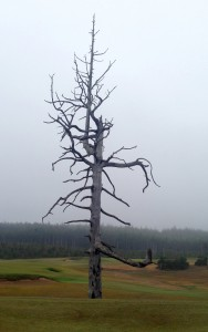 This dead tree is a landmark on several holes at Old MacDonald.