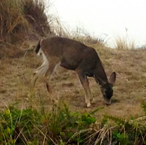 This deer had no fear of golfers.