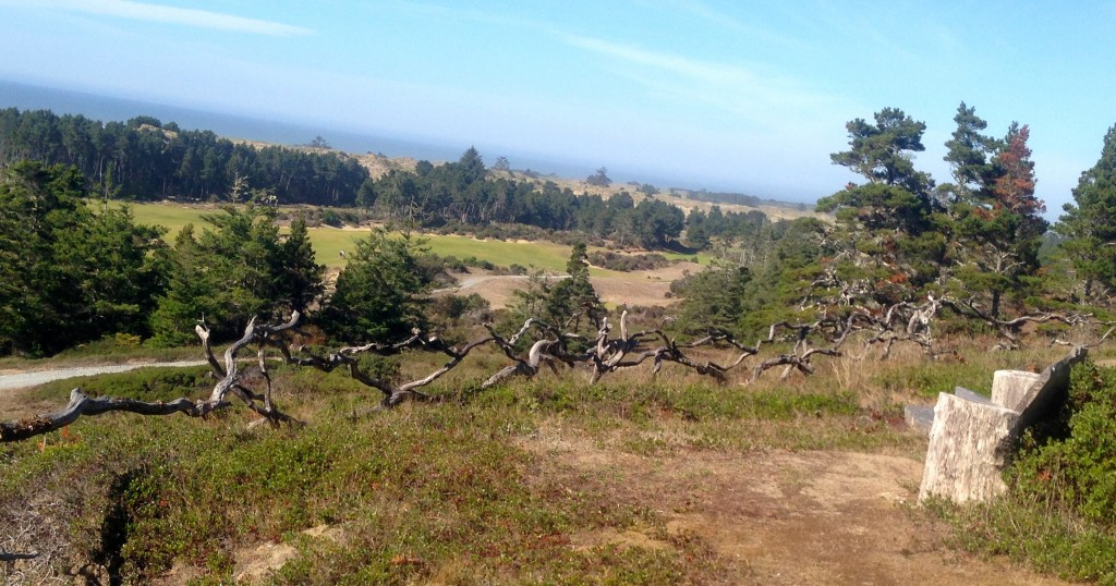 The bench behind Bandon Trails' No. 14 tee marks the spot where Mike Keiser decided to build his Bandon Dunes Resort.